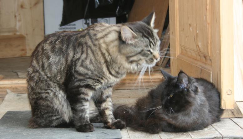 Оливер и Венди