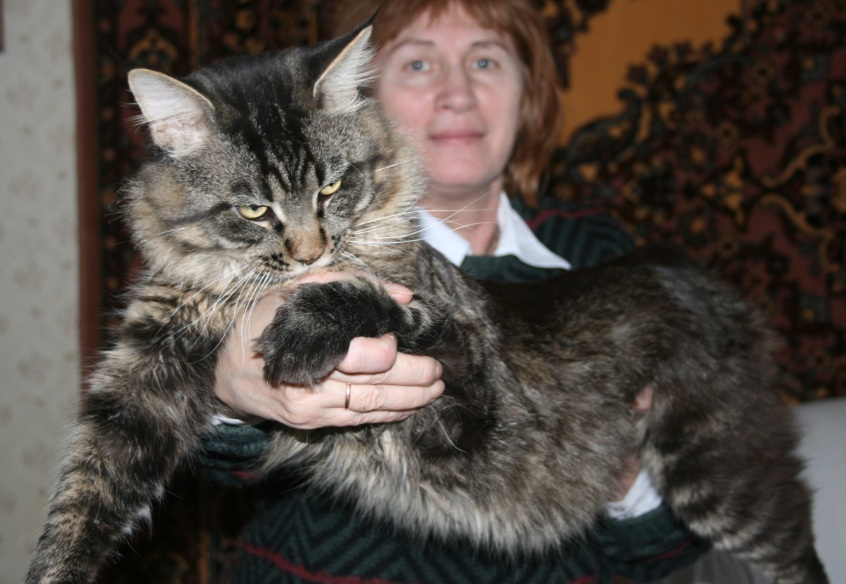 Males – «Forest Brothers» Maine Coon Cattery